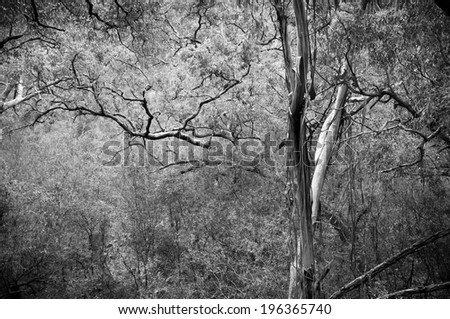 Spectacular canopy in dense, lush forest - stock photo