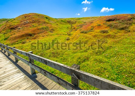 Spectacular colors of the vegetation in the summer of Phillip Island Nature Park, The Nobbies, Phillip Island, Victoria, Australia - stock photo