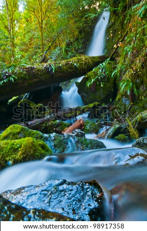 Spectacular Long Exposure Shot of a Waterfall in Olympic national Park surrounded by green rainforest foliage and giant boulder coverd in moss - stock photo