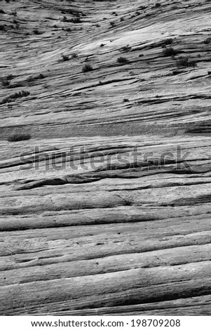 Spectacular patterns and textures of rocks at Zion national park, UTAH, USA, Circa May 2010 - stock photo