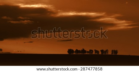 Spectacular sunset view with isolated trees in a row standing out in sharp contrast to the cloudy sky on the road to Johannesburg. - stock photo