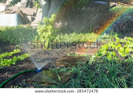 Spectral light caused by an active irrigation sprinkler in a rustic garden with fresh green vegetables and a stone walkway in a warm day of spring or summer - stock photo