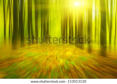 Speedy drive in the forest. - stock photo