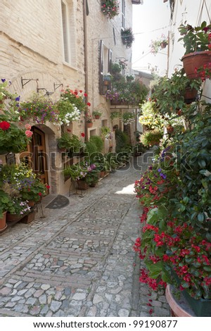 Spello (Perugia, Umbria, Italy), old typical street with potted plants and flowers