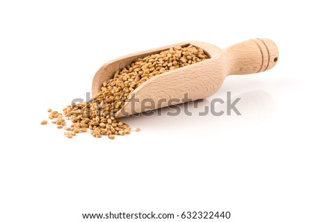 Spelt grain (dinkel wheat) in wooden scoop isolated on white background