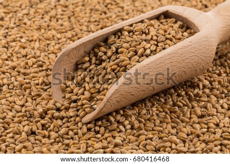 Spelt grain (dinkel wheat) on a wooden scoop and background