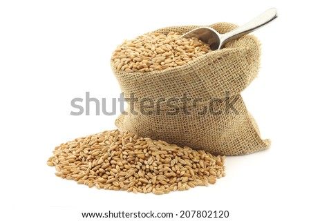 spelt in a burlap bag with an aluminum scoop on a white background - stock photo