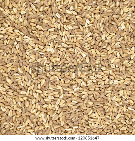 Spelt organic wheat raw cereal close up texture or background. Italian healthy eating