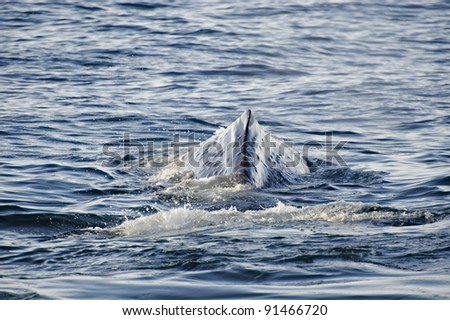 Sperm Whale, Kaikoura Coast, New Zealand - stock photo
