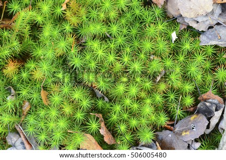 Sphagnum moss - marsh plant. Texture, background