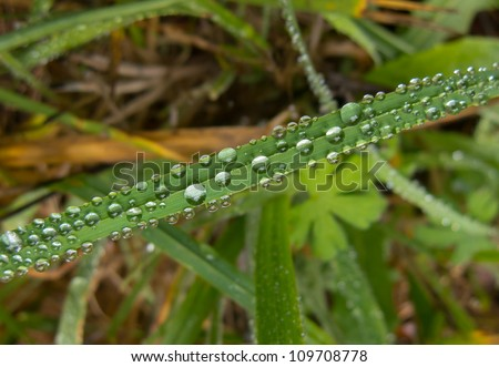 Spherical dew drops on a blade of grass - stock photo