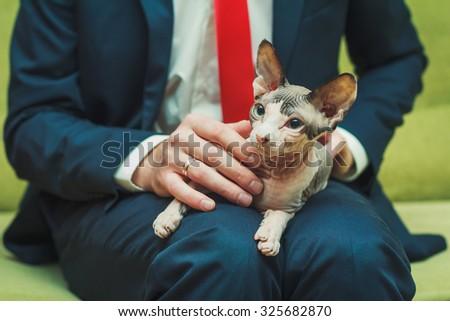 Sphinx cat sitting on the man's knees - stock photo
