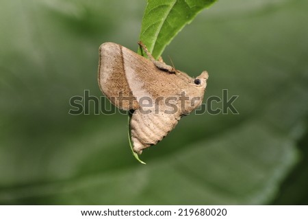Sphinx in the green leaf