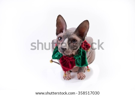 Sphynx cat sitting on white background in the studio with holiday collar - stock photo