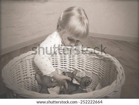 SphynxClose up Little Blond Girl Touching the Sphynx Kittens Resting in a Wooden Basket - stock photo