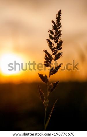 Spica on sunset. - stock photo