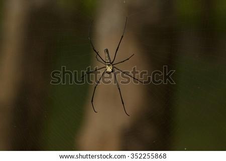 spider - stock photo