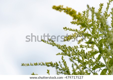 spider among sprigs of grass with yellow buds on the background of cloudy sky