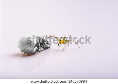 Spider and bird skull - stock photo