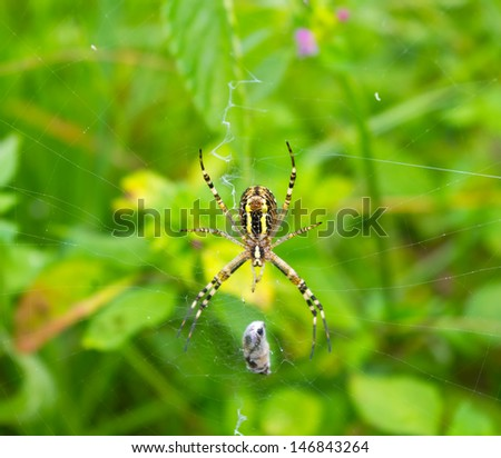 Spider and cocoon on the web over green background  - stock photo