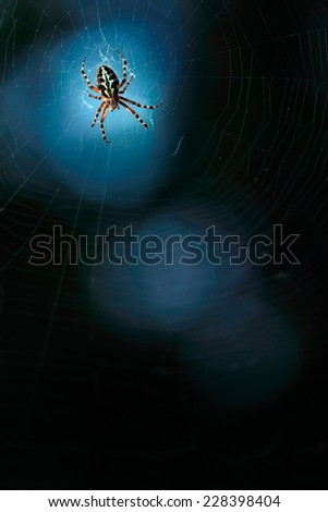Spider by night  - stock photo