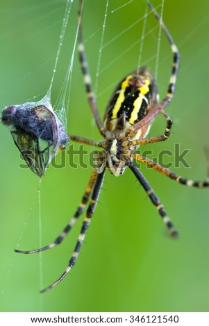 spider caught a fly in a web - stock photo
