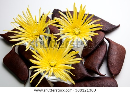 Spider Chrysanthemum Flower Arrangement for beauty treatment in spa.