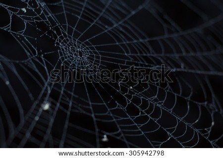 Spider cobweb closeup with morning dew against dark background - stock photo