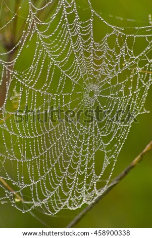 Spider Cobweb, Spider Web with Raindrops, Morning Dew / Spinnennetz mit Tautropfen, Regentropfen