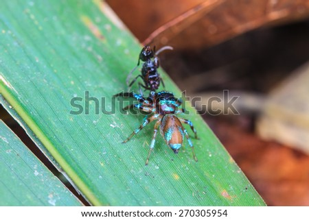 spider in forest, abstract in nature background - stock photo