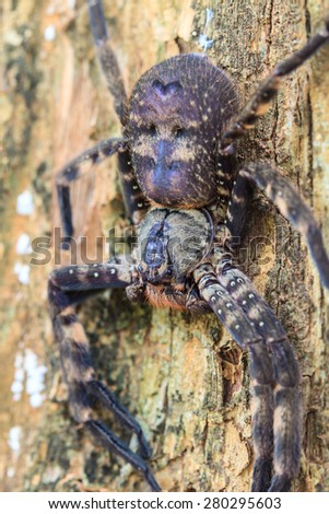 spider in forest, abstract in nature background