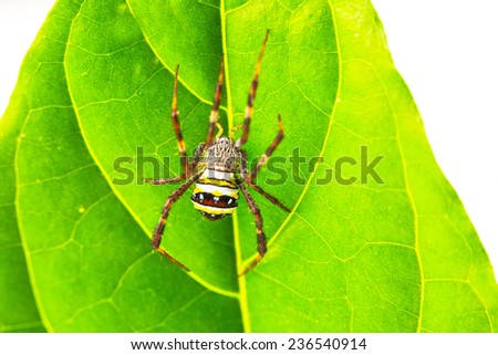 Spider in Thailand - stock photo