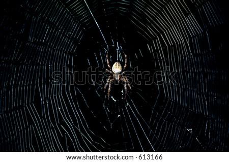 Spider in the dark - stock photo