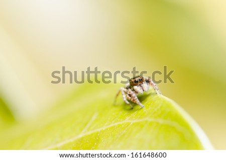 Spider in the nature green background macro shot