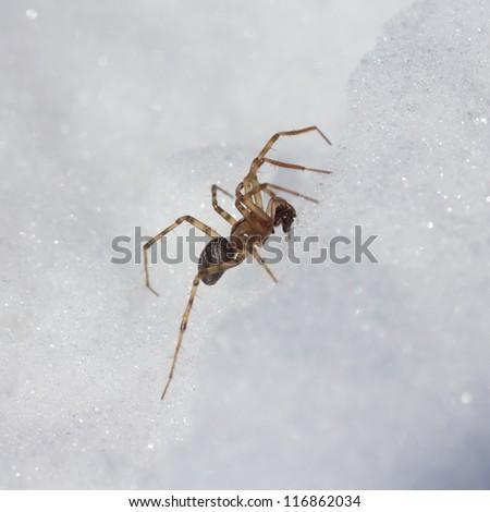 Assassin Bug Vancouver Island