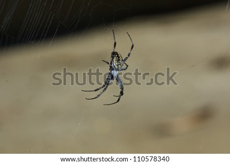 Spider In Web - stock photo