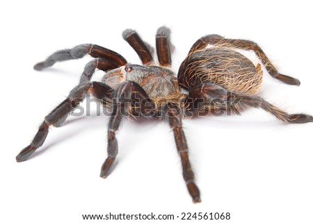 Spider isolated on white background.
