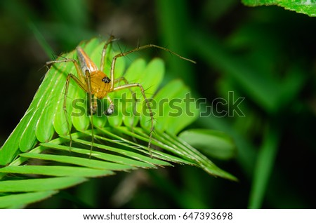 Spider jumping on grass , background