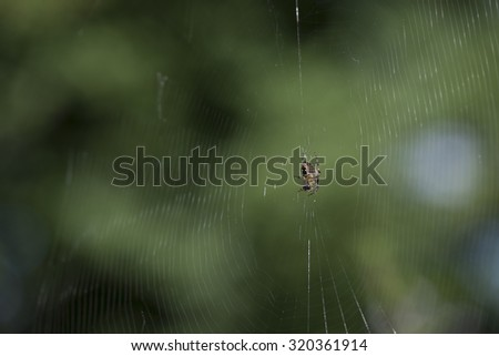 Spider making his web  - stock photo