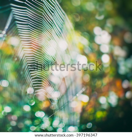 Spider net and blurred background with round bokeh. Shallow depth of field