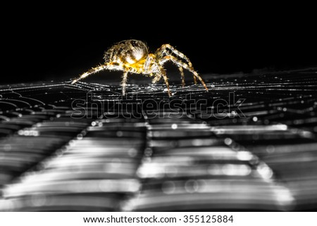 Spider on a web - stock photo