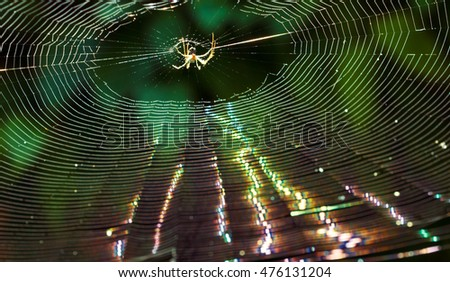 spider on a web in the forest, in back light