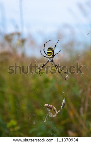 Spider on a web with a dead victim - stock photo