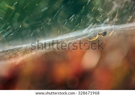 spider on a web with dew drops early in the morning - stock photo