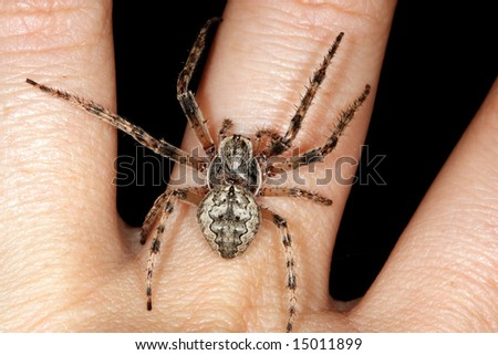spider on a women hand