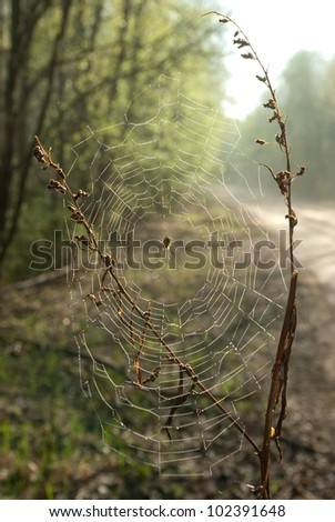 spider on cobweb against the road and forest - stock photo