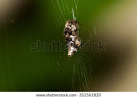 Spider on its web against a blurred background - stock photo
