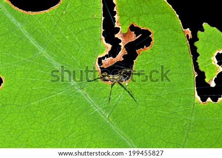 Spider on leaves textures