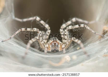 Spider on net