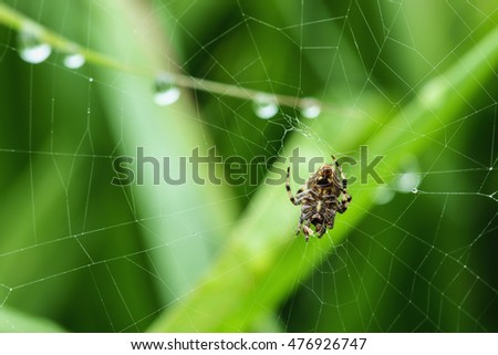 Spider on the web with dew drops backgrounds